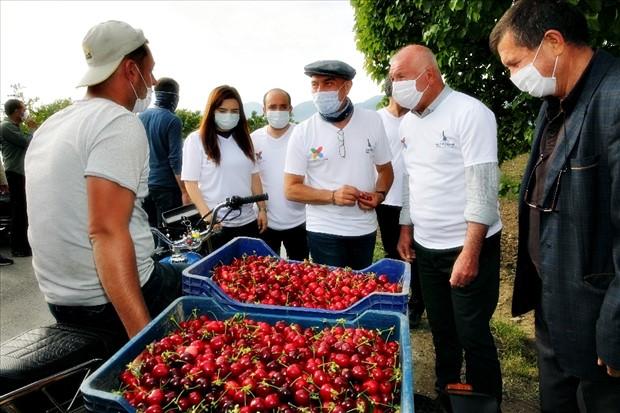 Haberler | İzmir'in kirazı imeceyle toplanıyor
