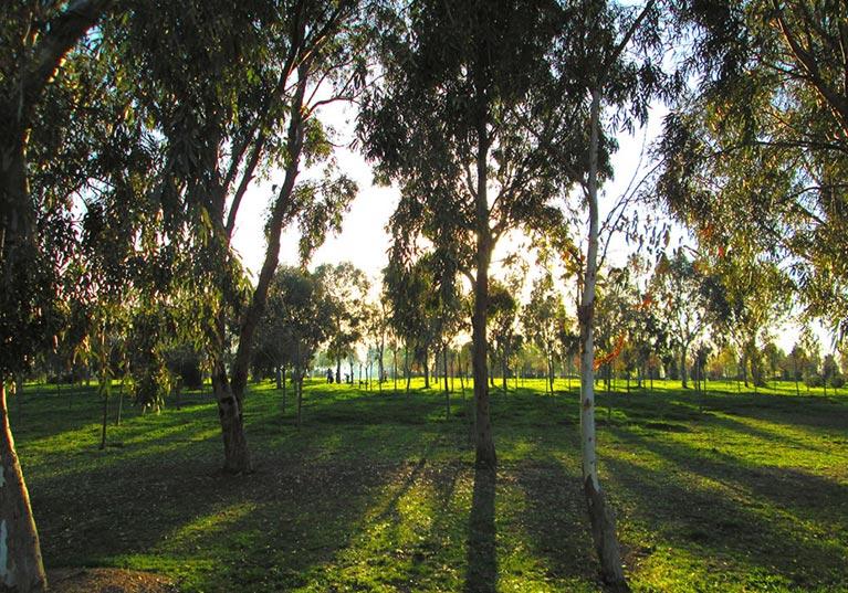 İnciraltı Kent Ormanı fotoğrafı 1